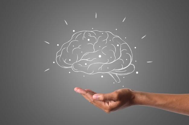 Que es la neurodidactica